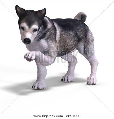 Cute Puppy Malamute