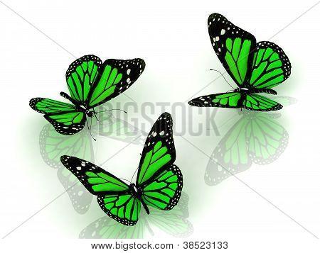 Three Beautiful Green Butterfly