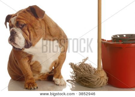 Bulldog With Mop And Bucket