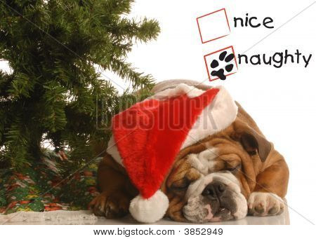 Bulldog Under Christmas Tree Naughty