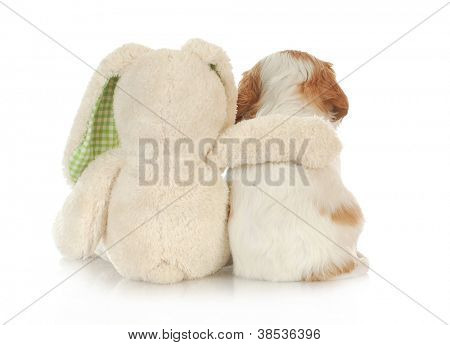 best friends - stuffed rabbit with arm around cavalier king charles spaniel puppy on white background