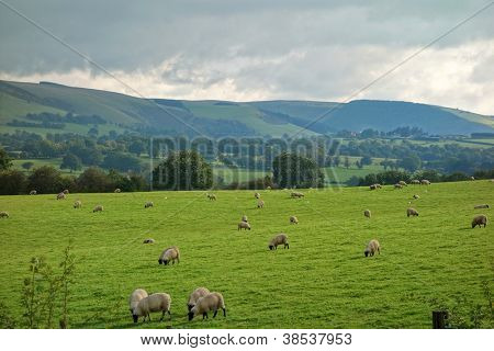 Wales countryside fields and hills, sheep grazing.