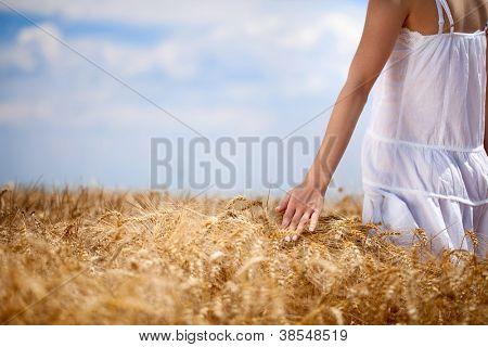 Female  hand touching golden maturely wheat