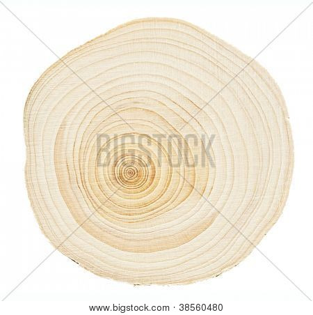 Wood stump rings texture, wooden background