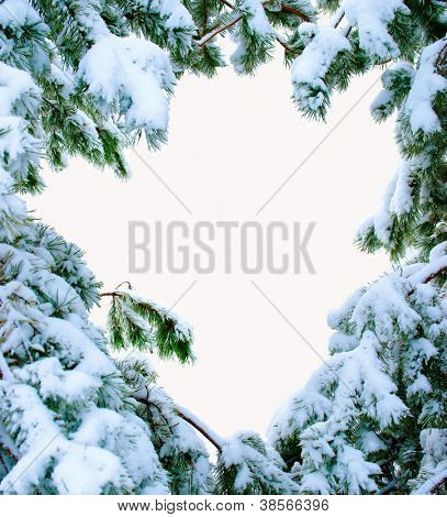 snow covered fir branches. Christmas tree in snow. Isolated over white.