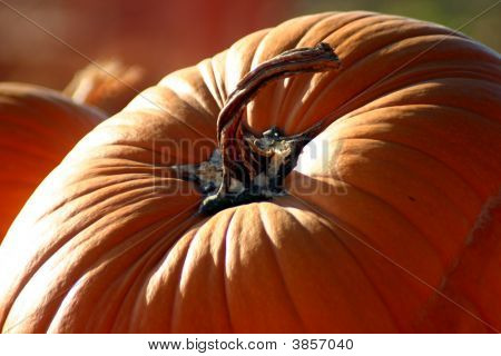 Curvature Of The Pumpkin