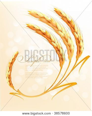 Ohren der Weizen Background. Vektor-illustration