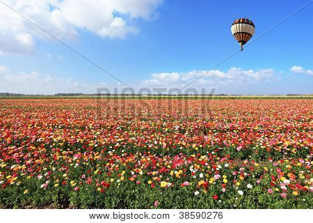 Spring Day in Israel.  Bright striped balloon flies over a field of colorful garden of buttercups.