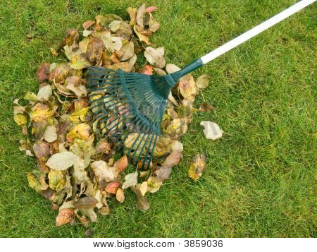 Cleaning Of Autumn Leaves