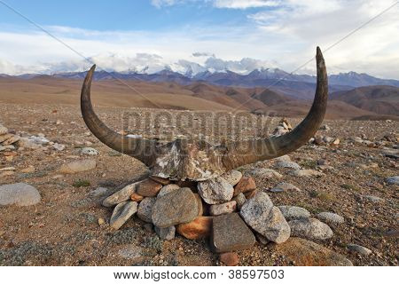 Yak skull decorated with Buddhist mantras with Gurla Mandhata mountain on background, Tibet