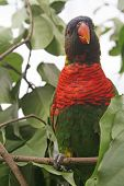 stock photo of polly  - colorful parrot resting on a tree branch background - JPG