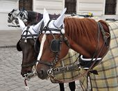 stock photo of pavestone  - Heads of two Brown horses with harness - JPG