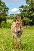 Furry Donkey poster