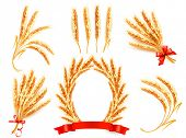 image of threshing  - Ears of wheat - JPG