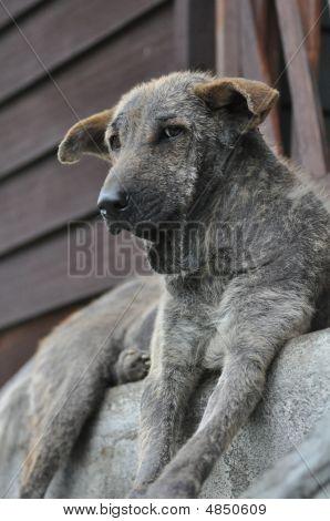 Ugly Dog Sit
