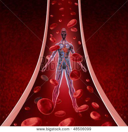 Circulação humana saúde