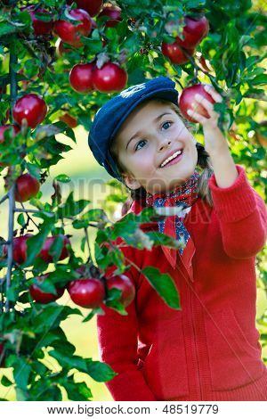 Apple orchard -  cute girl picking red apples into the basket