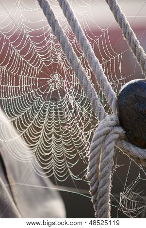 Morning Dew On Spiderweb Sailboat Detail