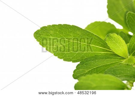 Stevia Sweetleaf.