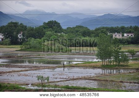 Southern paddy in China
