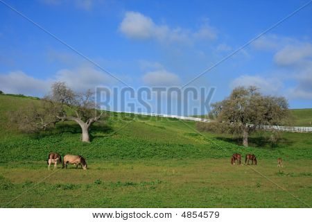 Countryside In Spring
