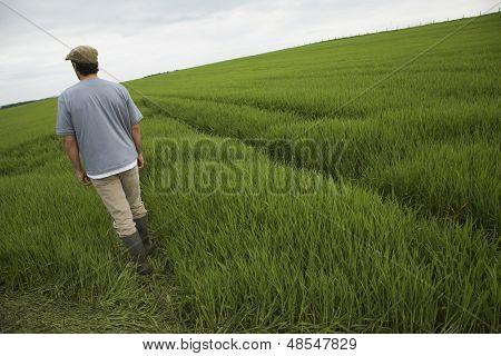 Rear view of a man walking in tilt field