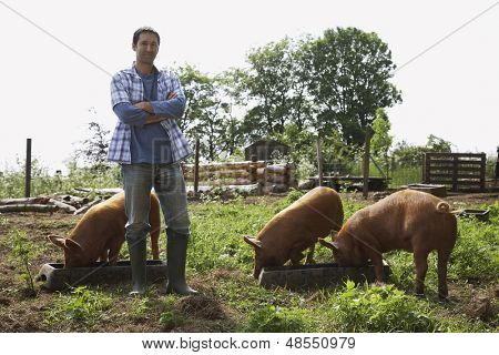Full length portrait of a man standing with arms crossed by pigs in sty