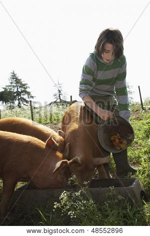 Young boy feeding pigs in sty against clear sky