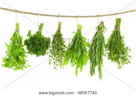 Spice Kräuter Set / isolated on white Background / Sträuße von Thymian, Basilikum, Oregano, Petersilie, sa