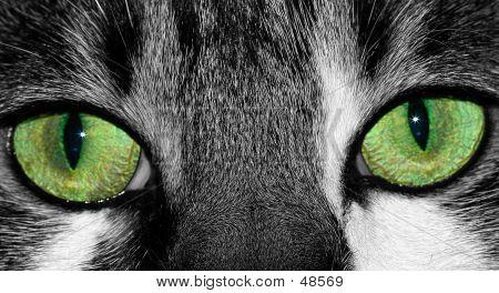 Do sorte olhos