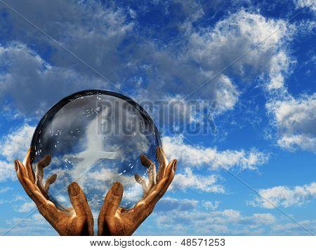 Pássaro branco visto na globo