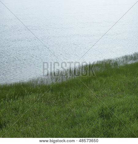 Grass Growing In Water