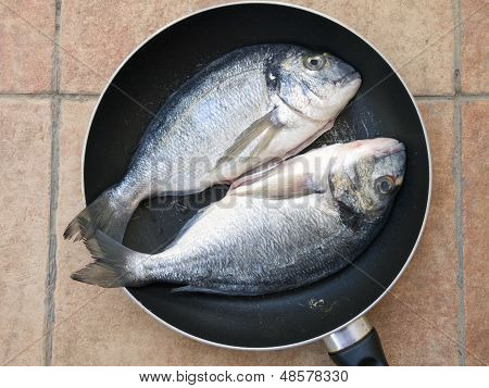 Two Dourada Fishes