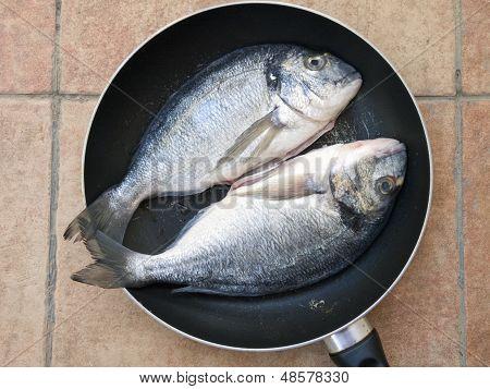 Zwei Dourada Fische