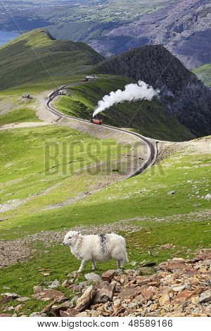 Sheep and mountain railway from the Llanberis Pass, Mount Snowdon, Snowdonia, Wales UK
