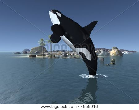 Orca - Killer Whale