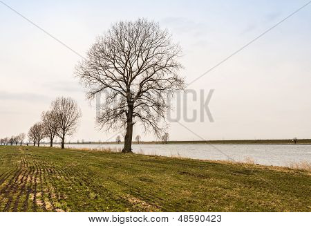 Row Of Bare Trees At A Riverside