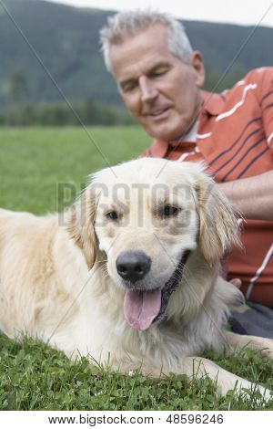 Closeup of a blurred senor man lying on grass with golden retriever