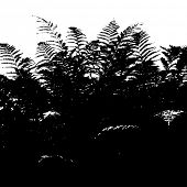 stock photo of fern  - Abstract background with leaves silhouette of fern - JPG