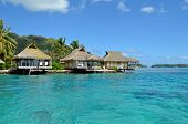 picture of french polynesia  - Luxury thatched roof honeymoon bungalows in a vacation resort in the clear blue lagoon of the tropical island of Moorea near Tahiti in French Polynesia - JPG
