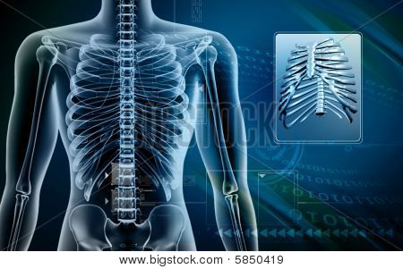 Human body and Rib cage