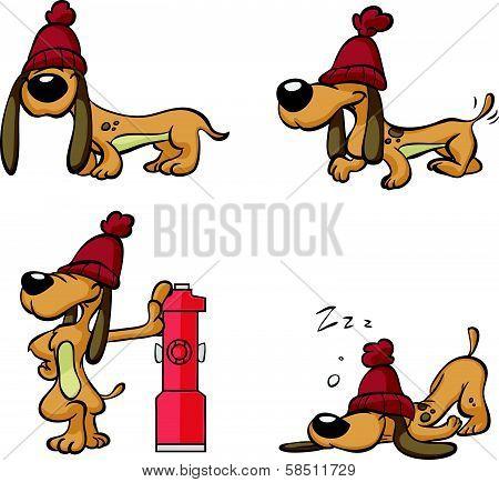 cute lazy brown dog