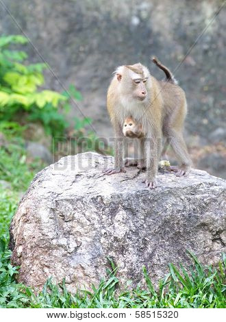 monkey family at zoo