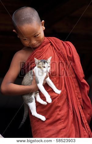 Novice And Cat