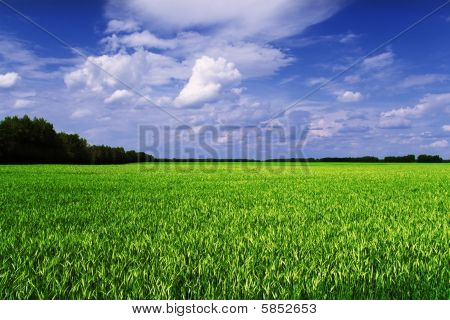 Cereal field scenic view (green yellow and blue)