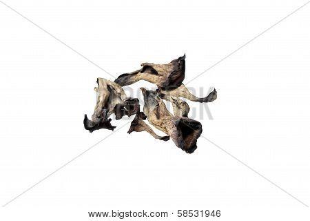 Muschrooms Craterellus Cornucopioides