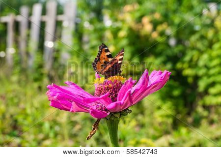 Butterfly on a flower in the garden