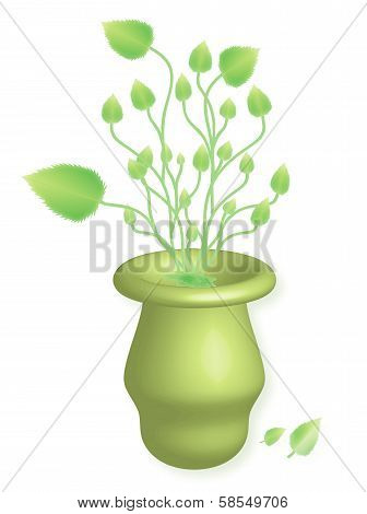 Herbs in vase