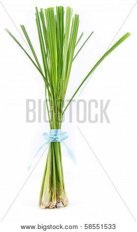Lemon Grass Stand On  White Background
