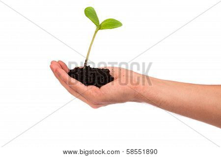 Male Hand Hold A Small Sprout And An Earth Handful